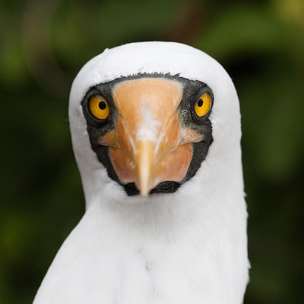 Galapagos_export-22.jpg