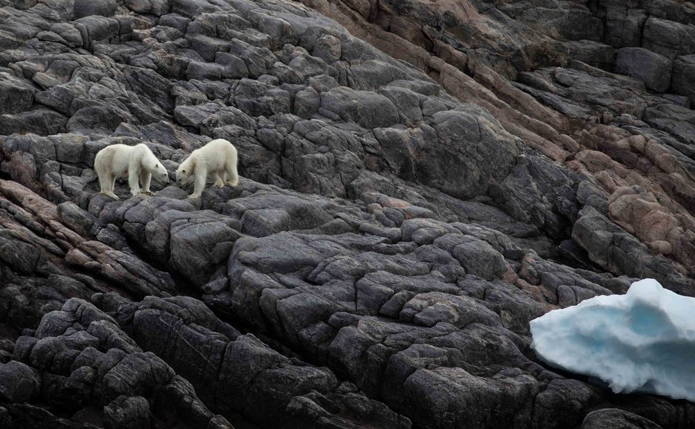 2014-08 Baffin_Island_site-6.jpg
