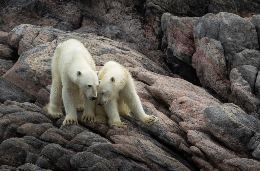 2014-08 Baffin_Island_site-5.jpg