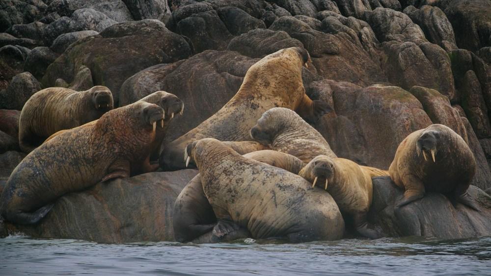2014-08 Baffin_Island_site_2-6.jpg