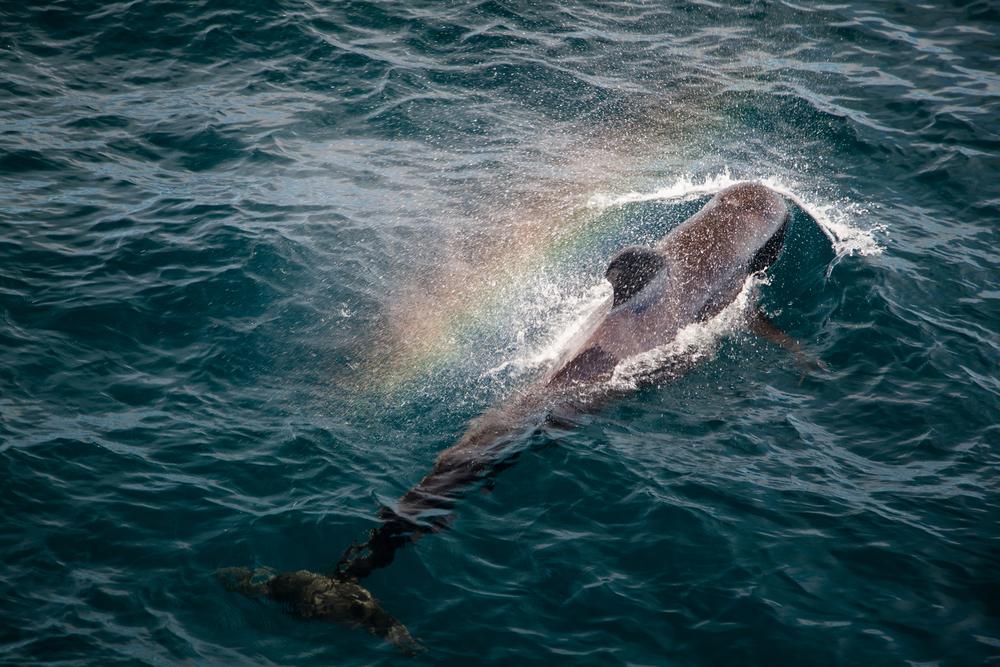 Whales-4.jpg