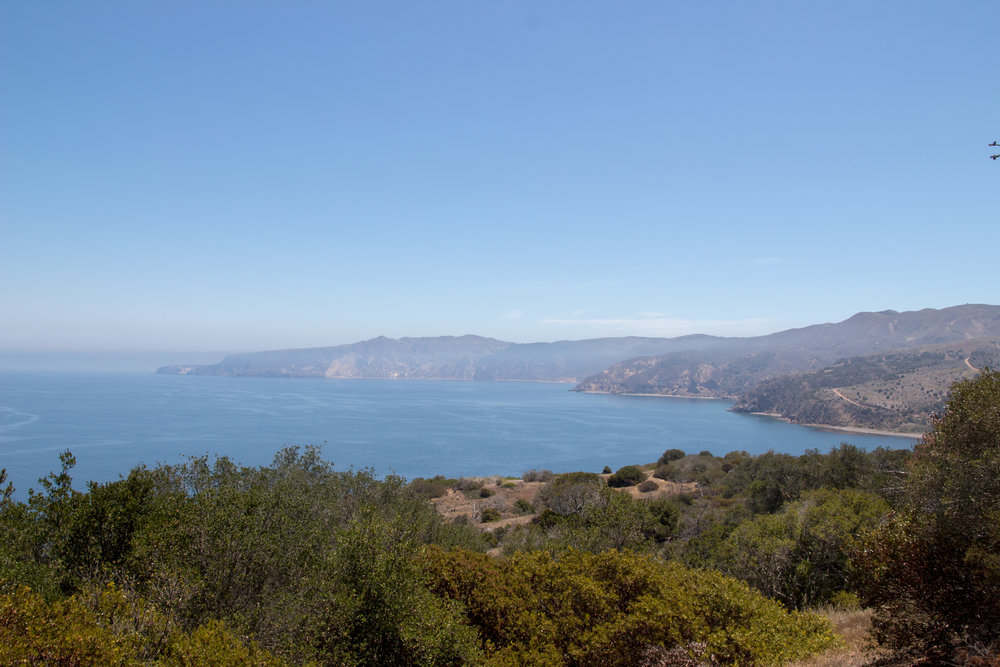Location: Santa Cruz Island, Channel Islands National Park, California