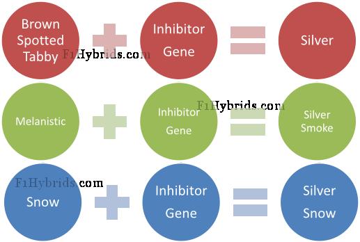 Picture : Inhibitor Gene Impact Diagram