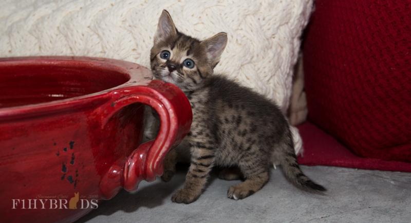 kopi-kitten-5litter-23.jpg