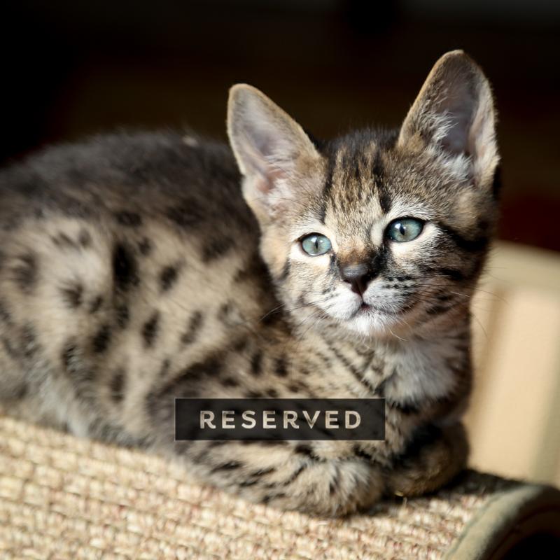 kopi-kitten-5litter-5.jpg