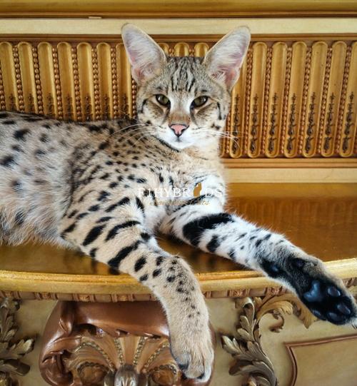 past-kittens-19.jpg