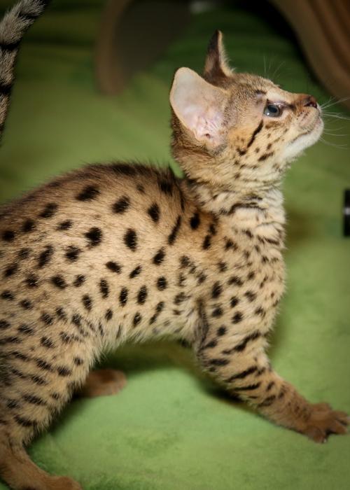 past-kittens-10.jpg