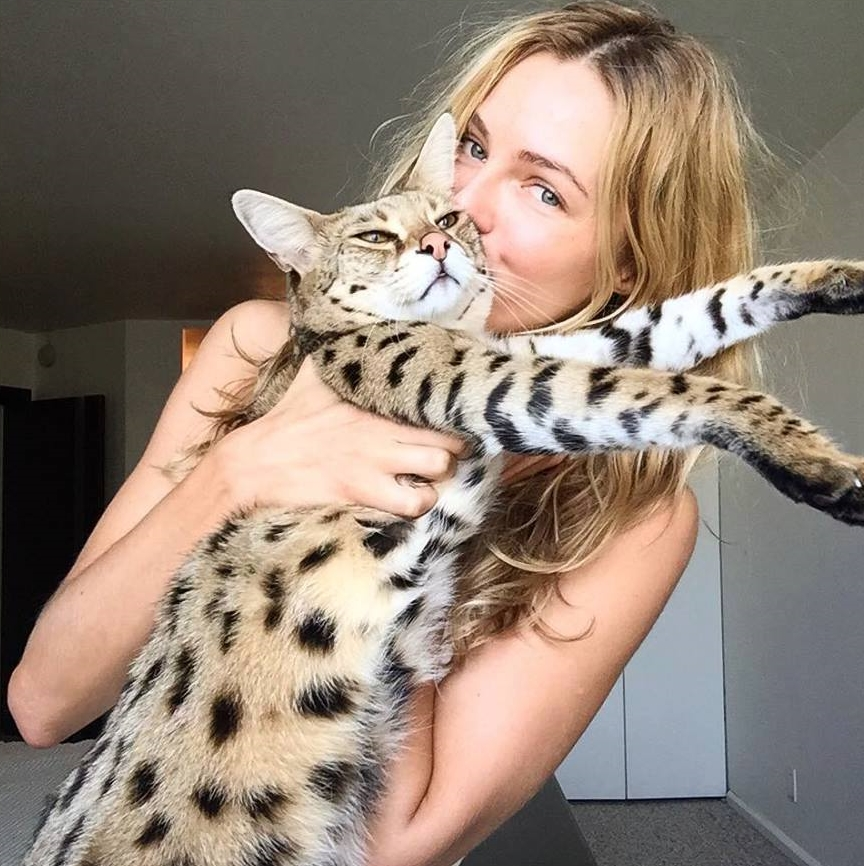 Celebrity Savannah Cat Owner