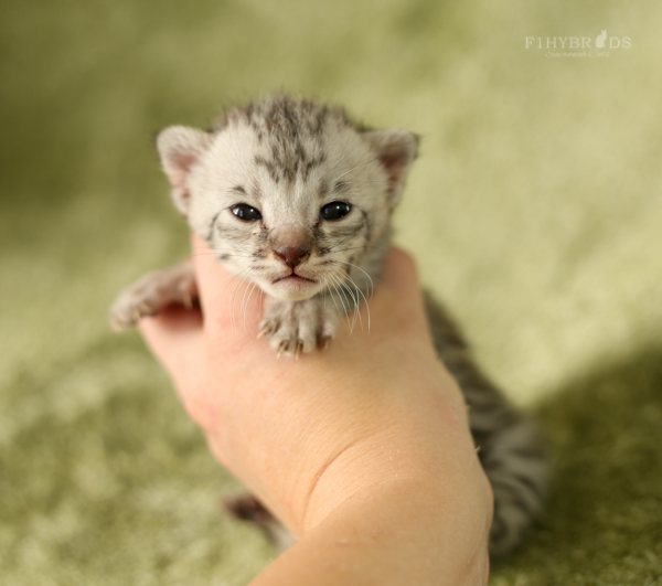 f2-kittens-3.jpg