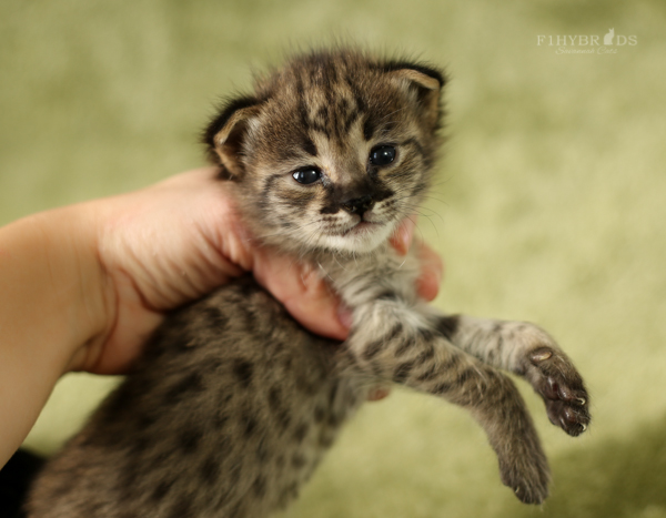 f2-kittens.jpg