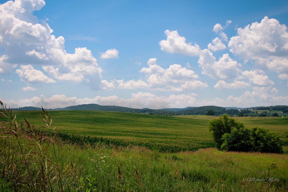 Back pasture.
