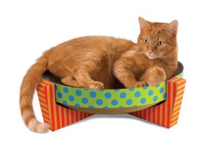 Savannah Cat Care Toys Litterbox Anestesia Diet