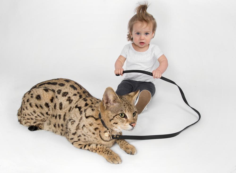 Eva & Omi - F1 Savannah Cat