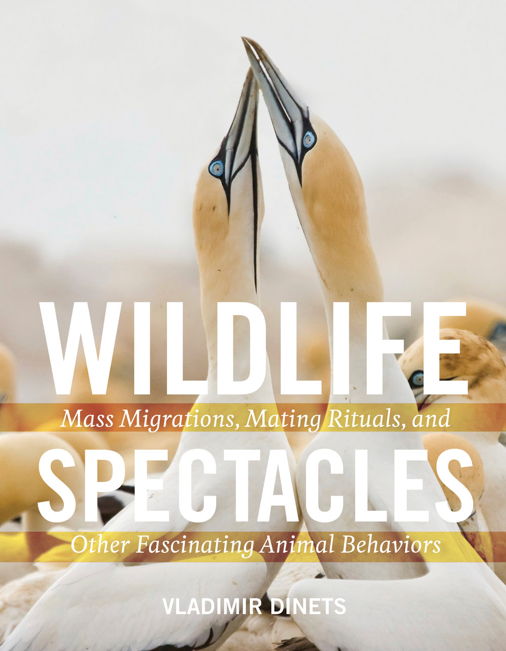 Wildlife Spectacles.jpg