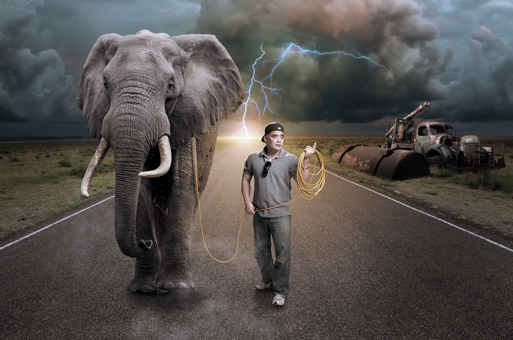 CSP-Elephant-Walking.jpg