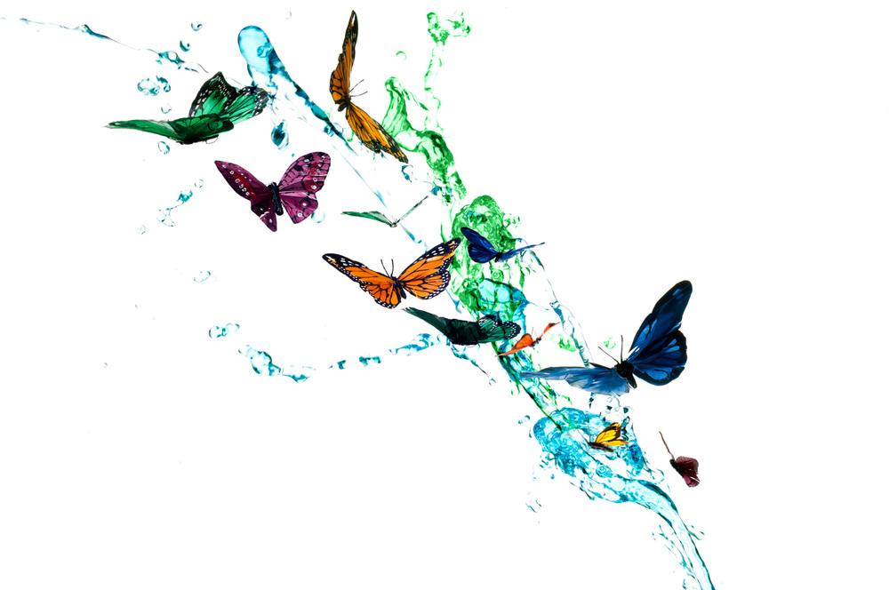 CSP-Creative-Butterflies.jpg