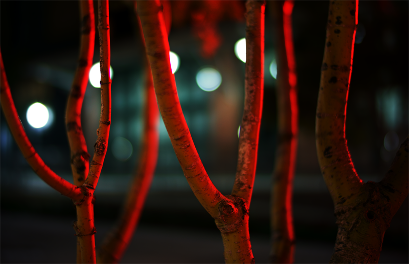 TAC UWT Red Trees 800.png