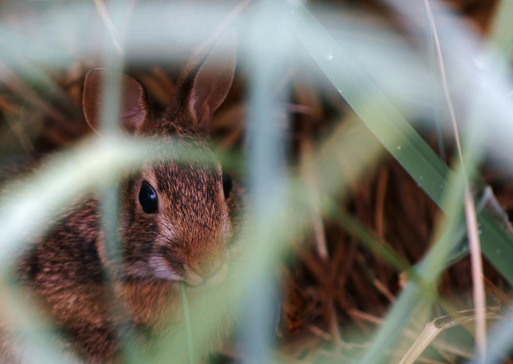 TAC Aquatic Rabbit med.jpg