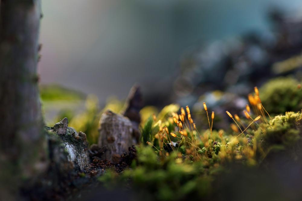 Tree Moss 1 med.jpg