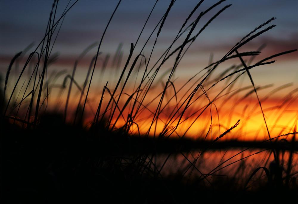 TAC Steilacoom Sunset med.jpg