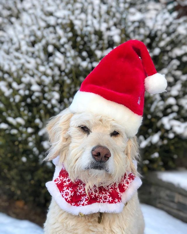 Merry Christmas to all my friends, near and far. My 11 yr young pup, Charlie, and i wish that your day is filled with fun and love and lots of treats 😍 . . #merrychristmas #feliznavidad #unconditionallove #seniordogsofinstagram #itsadogslife