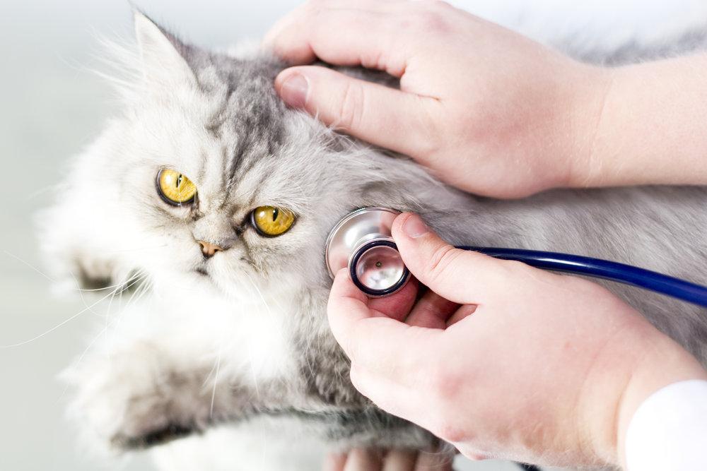 cat vet pet insurance.jpg