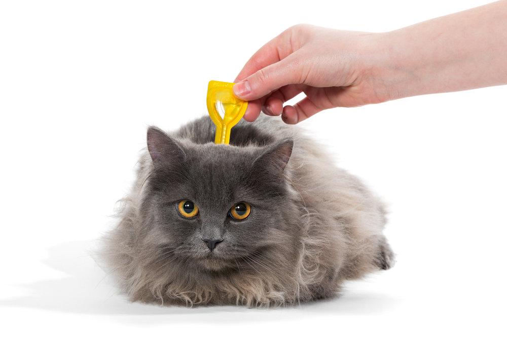topical medication cat flea cream