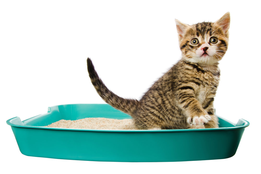 cat litter box training
