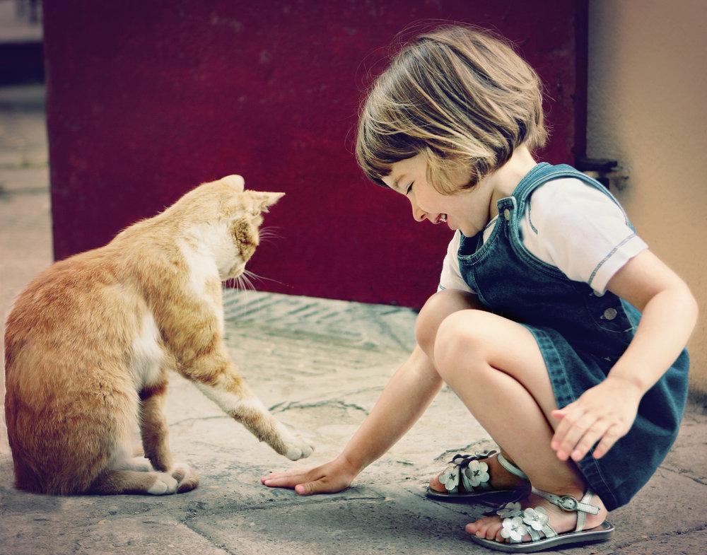 cat pet child death loss.jpg