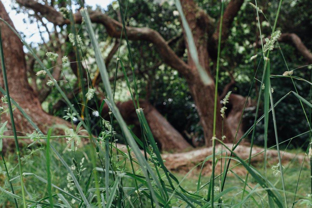 Maraehako16-17 smb-7074.jpg