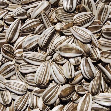 seeds-detail.jpg