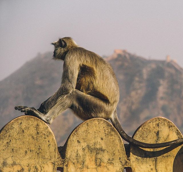 Humans could learn a lot from our monkey friends. This guy looks like he's mastered the art of chilling. 🙏 I bet he's good at throwing poo too... a skill we should all learn. 💩