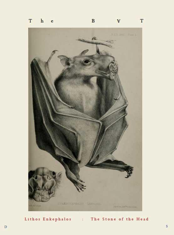 BAT-web.jpg
