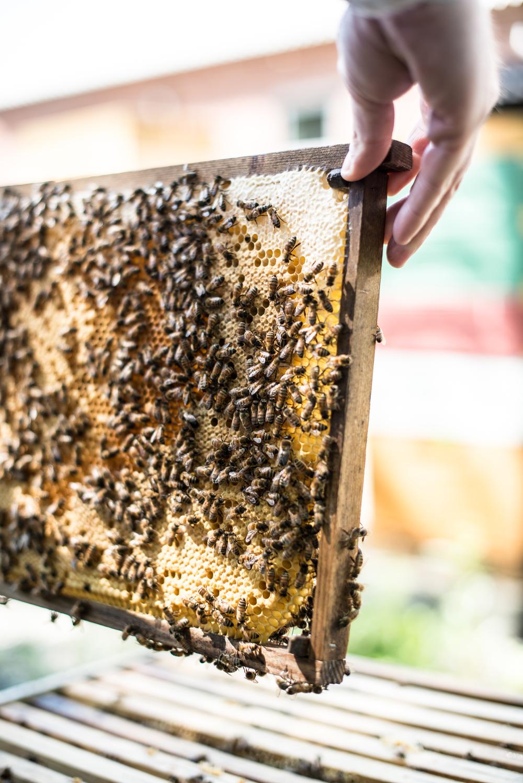 MK_bees.jpg