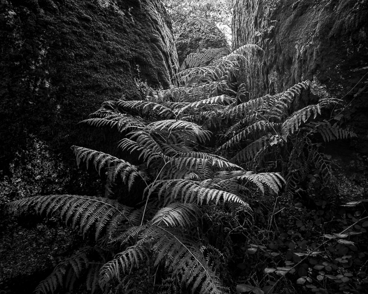 Stair of Ferns