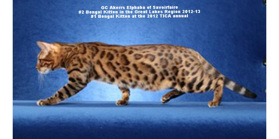 _Elphie-stalking1-e1375960745149-680x374_f_improf_327x180.jpg