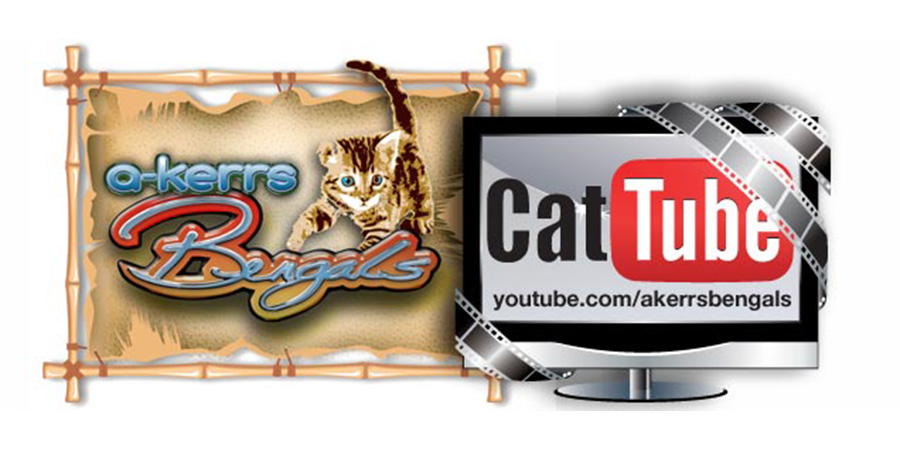 "See the latest videos from kittens in the present... and time warp into the past!   Hundreds of videos of babies growing up and adults playing their hearts out.  The more you activate your curiosity the more in touch with the ""cat"" you become!"