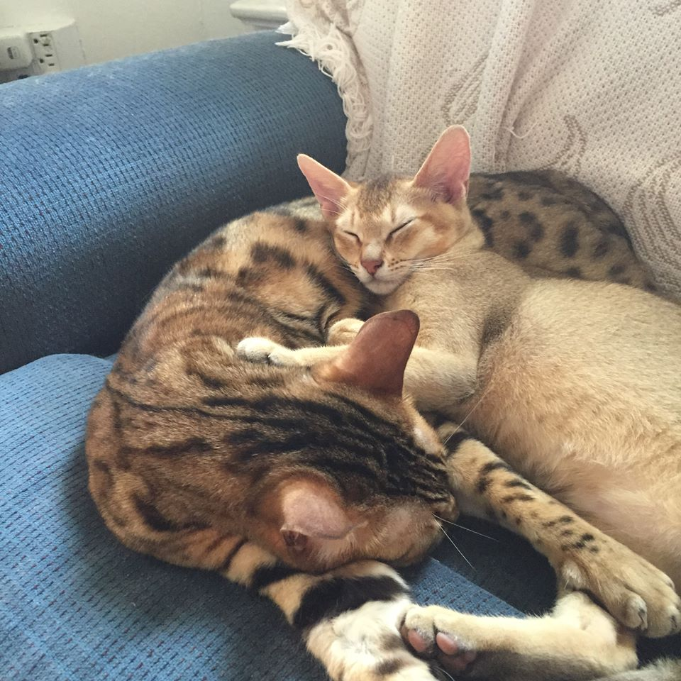 Feline lovers.jpg