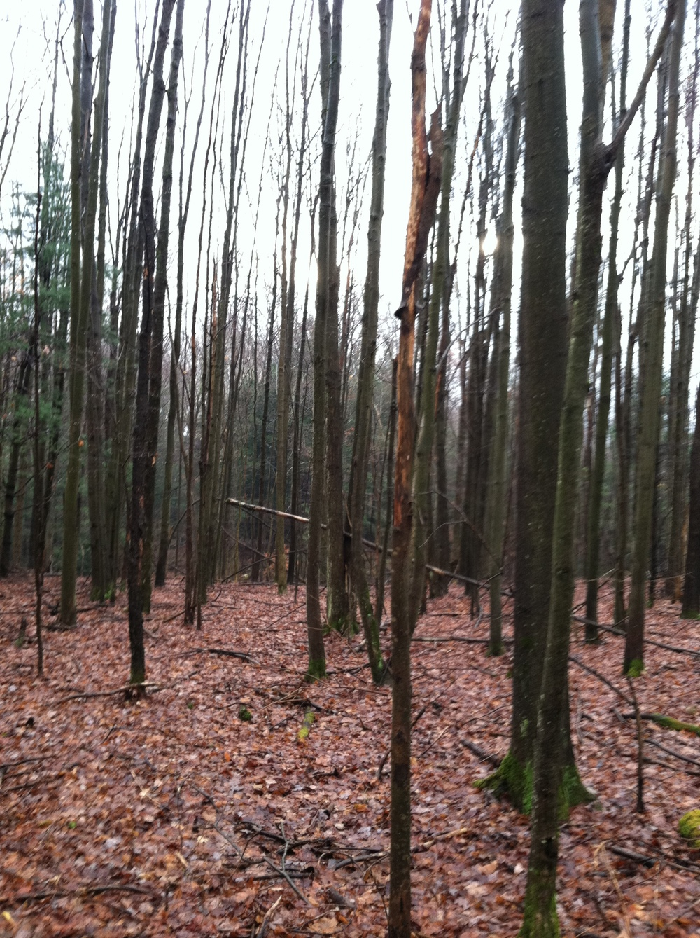 Mixed hardwood forest with ample forage.