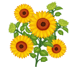 sunflowers2018.png