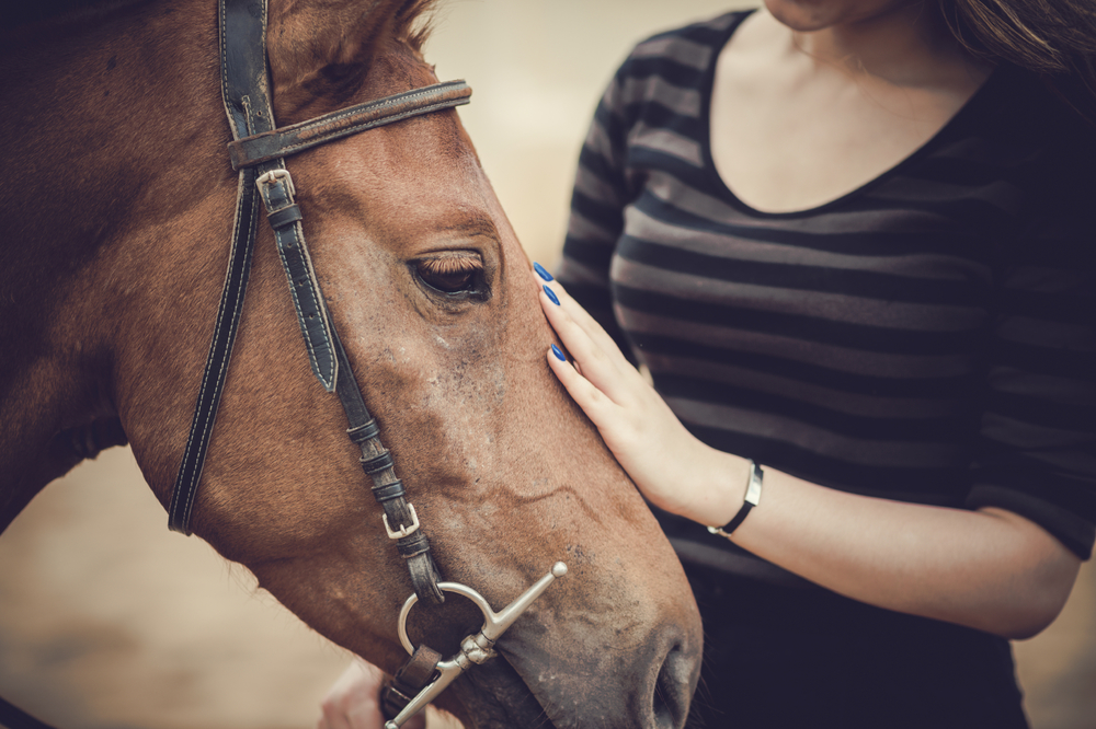 Equine_Therapy.jpg