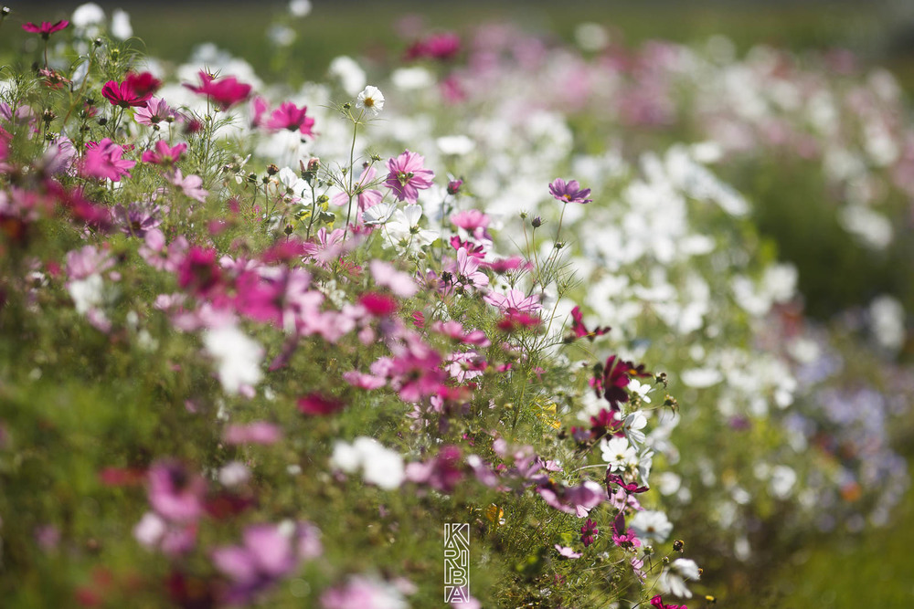 002-planjardin-fleurs.jpg