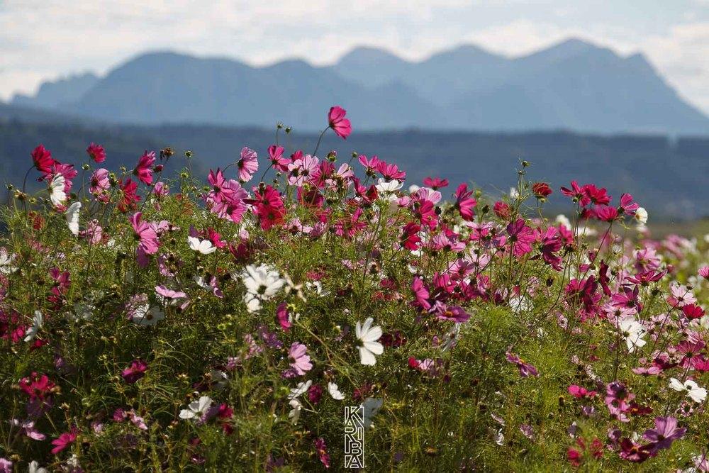 013-planjardin-fleurs.jpg