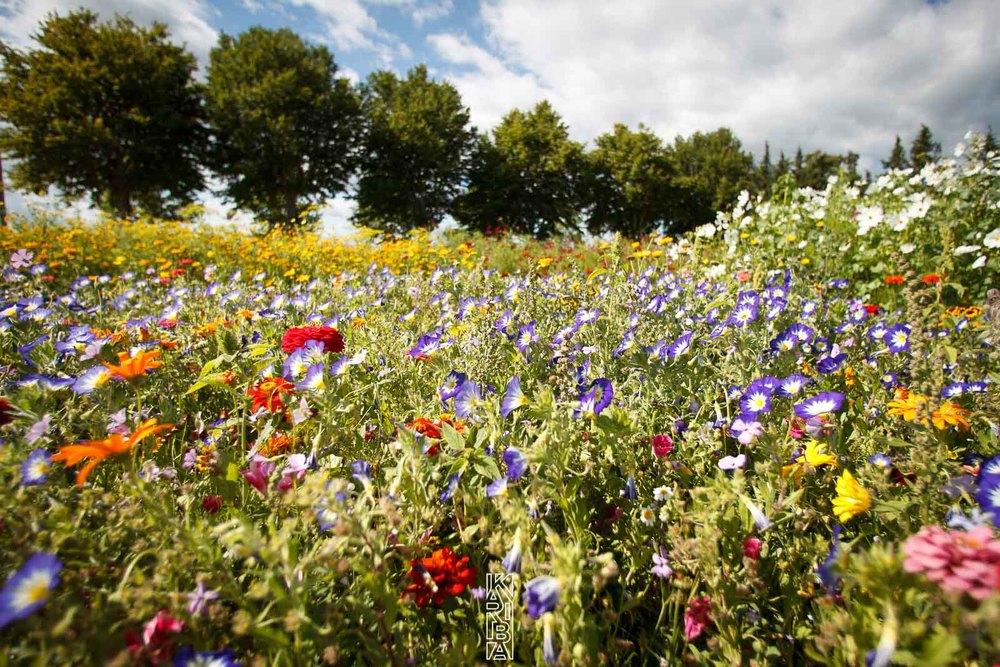 030-planjardin-fleurs.jpg