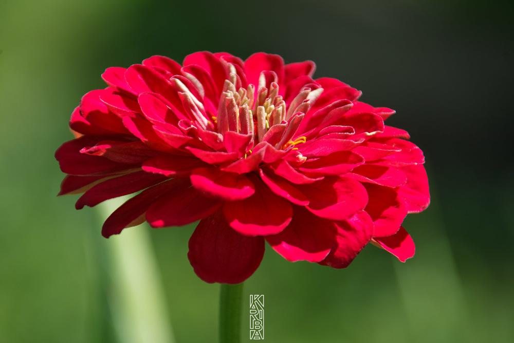 043-planjardin-fleurs.jpg