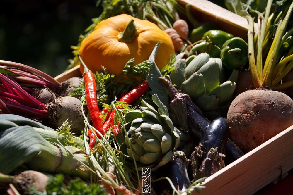 056-planjardin-légumes.jpg