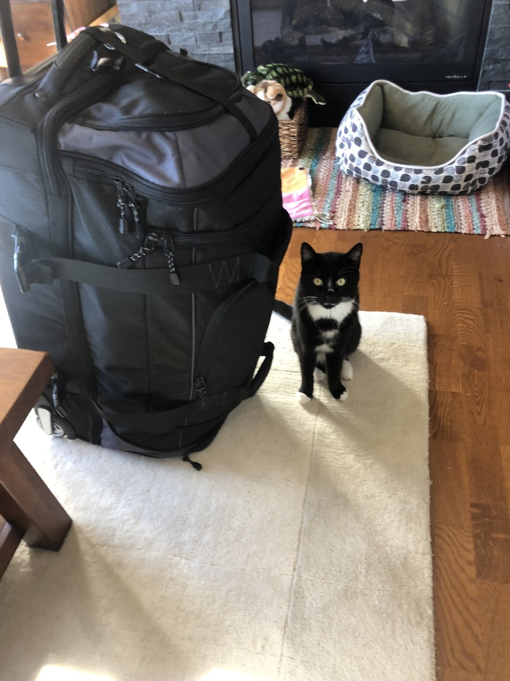 Siggy doesn't like when I travel.