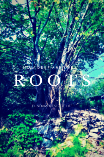 Roots. how deep?.png