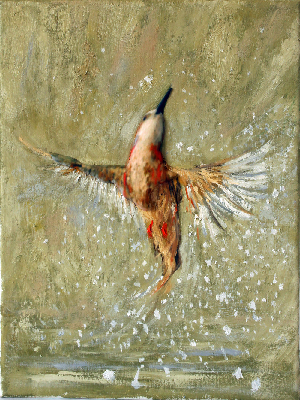 GUIDO SALIMBENI, Bird Splash
