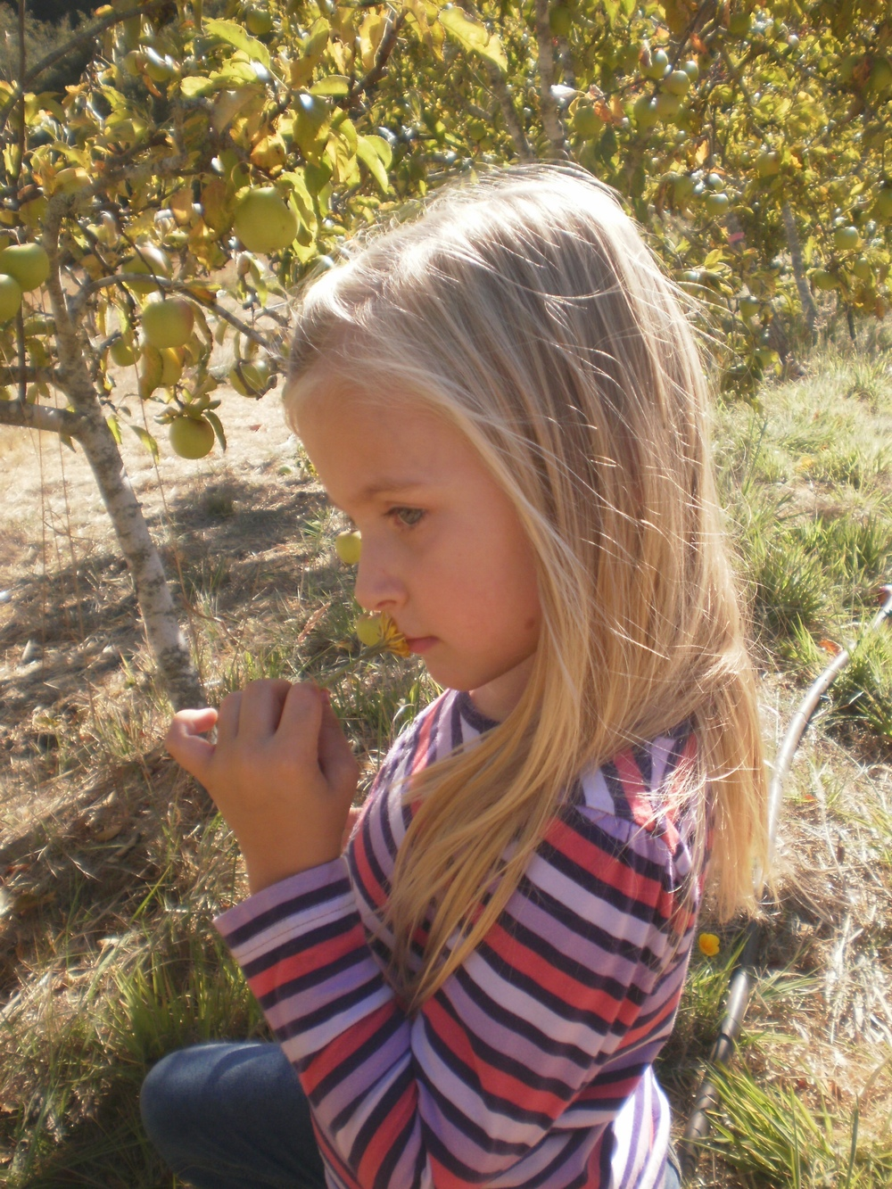 Kayla picking apples several years ago.